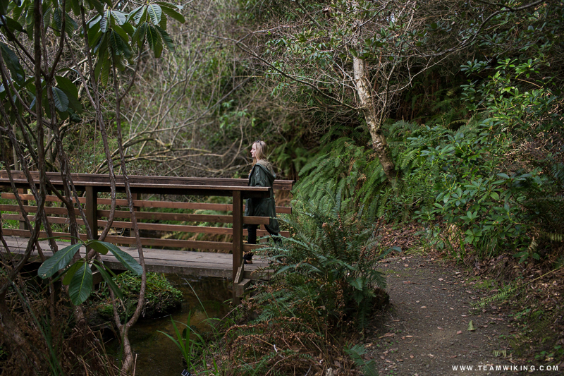 Fern Canyon Trail at Mendocino Coast Botanical Gardens in Mendocino, California