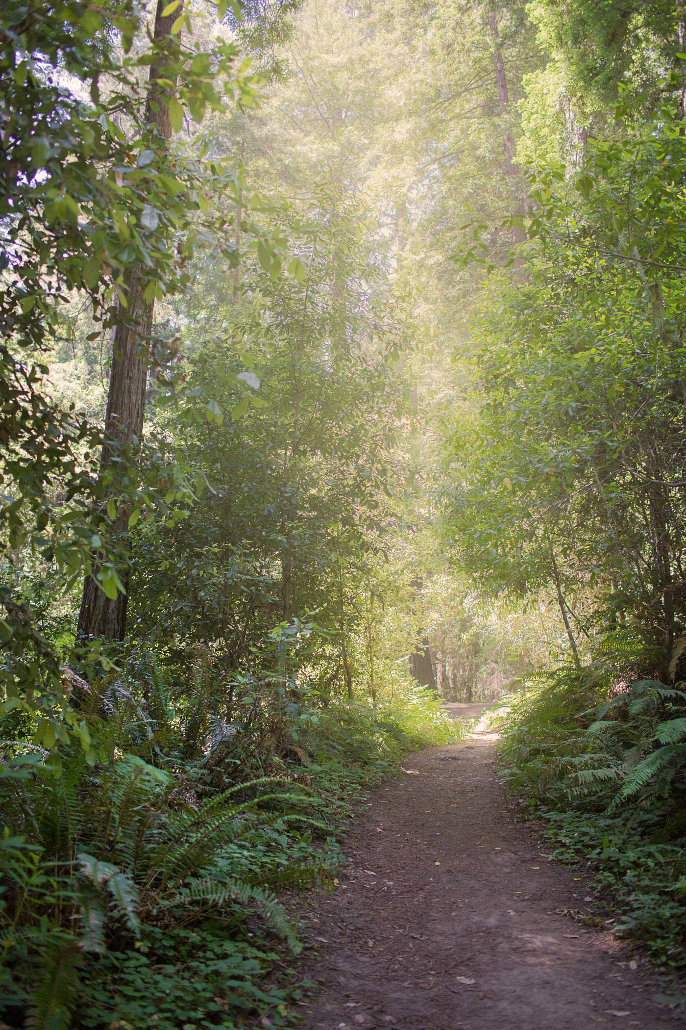Hiking California Redwood Forest
