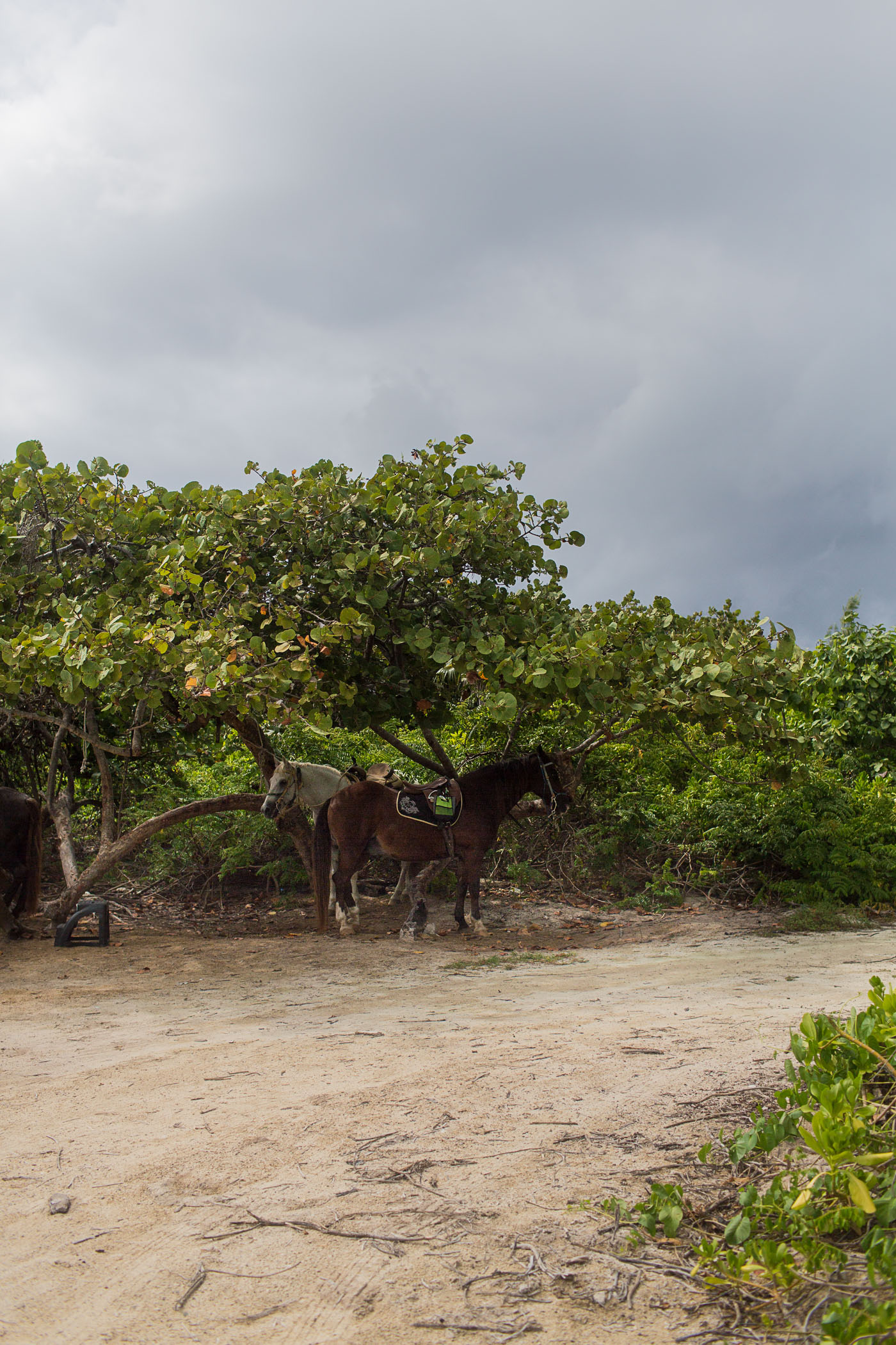 Horseback Riding on the beach in Grand Cayman