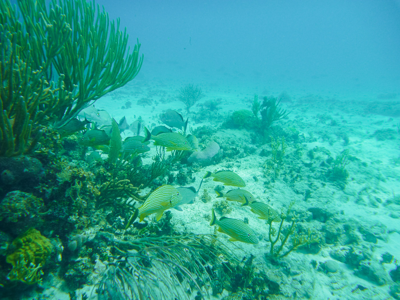 Snorkel Cayman Islands