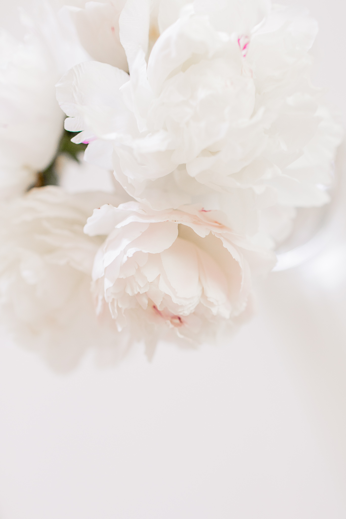 White peonies in a vase.