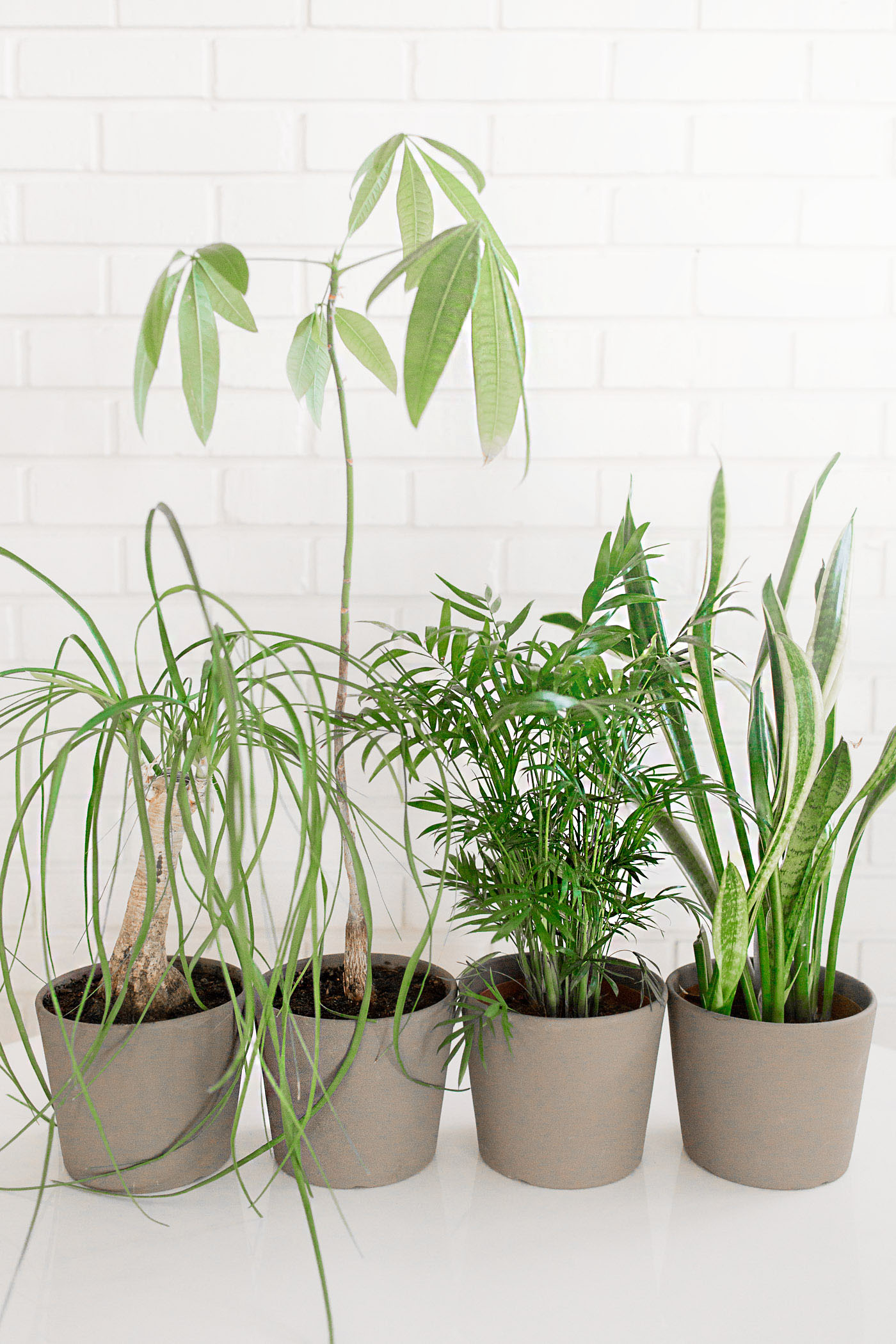 Easy to care for indoor plants.