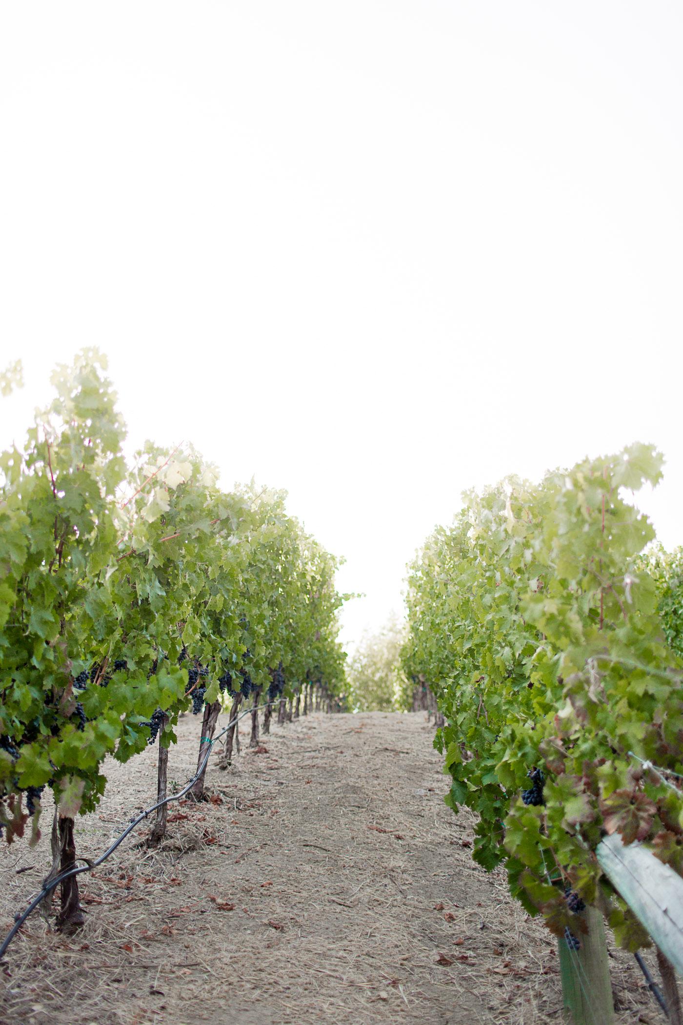 Padis Family Vineyard in Napa Valley, California